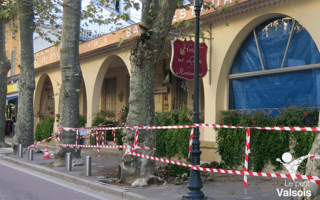 Coupe d'un platane – Avenue Paul Ribeyre