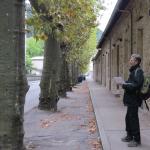 Un audit physiologique et mécanique des platanes - Boulevard de Vernon