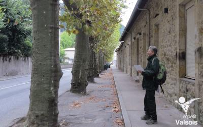 Un audit physiologique et mécanique des platanes – Boulevard de Vernon