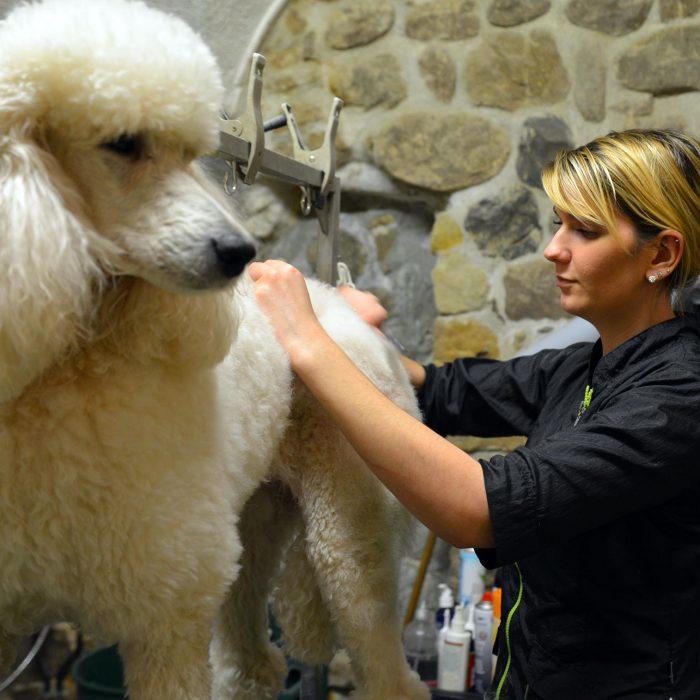Cococanin - toilettage pour chiens, chats et animaux de compagnie