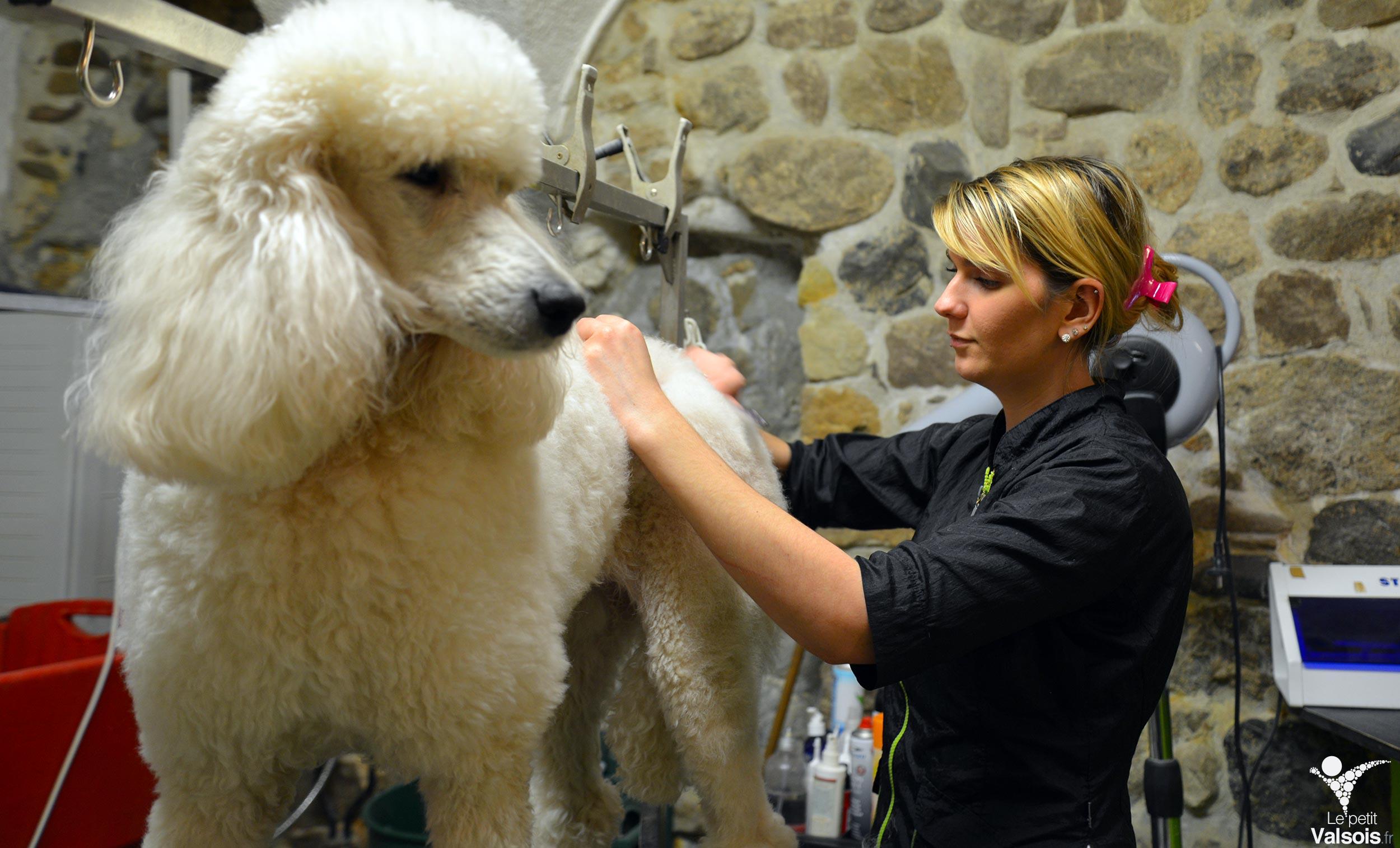 Cococanin – toilettage pour chiens, chats et animaux de compagnie