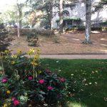 Espaces verts 2017 - Les pelouses du parc souffrent