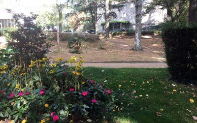 Espaces verts 2017 – Les pelouses du parc souffrent